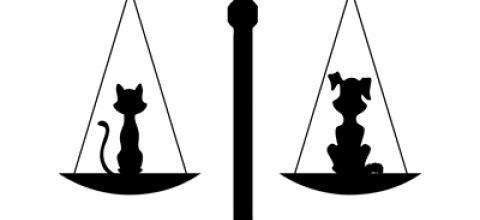 Loi Droit Animal sensibilité